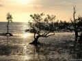Mangrove au couchant