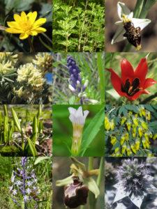 Plantes rares et protégées du Var @ La Londe-les-Maures